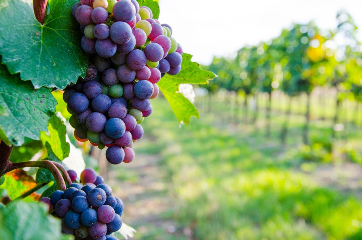 Weinkultur erwandern